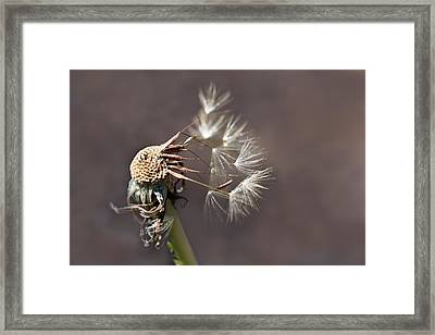 Framed Print featuring the photograph The Struggle by Marion Cullen