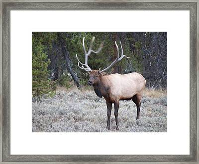 The Stud Framed Print