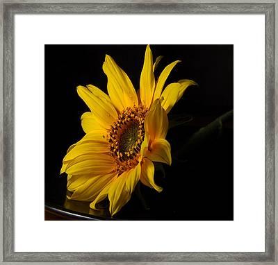 The Sun Flower  Framed Print by Davor Sintic