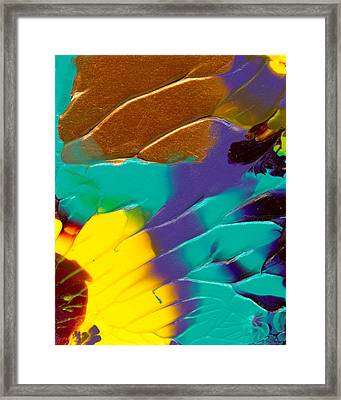 The Sunflower Framed Print by Nan Bilden