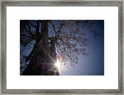 The Sunlight Shines Behind A Tree Trunk Framed Print by David DuChemin