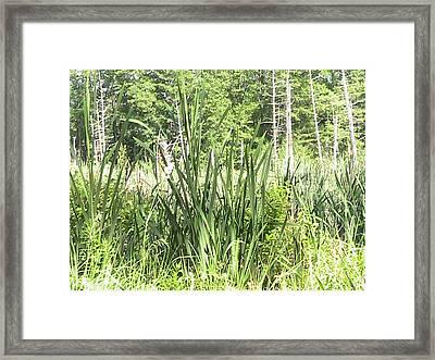 The Swamp Framed Print by Rachel Snell