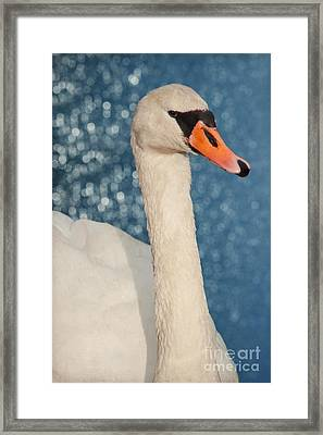 The Swan Framed Print by Angela Doelling AD DESIGN Photo and PhotoArt