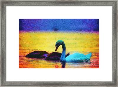 The Swan Family Framed Print