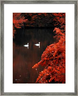 The Swan Pair Framed Print by Bill Cannon