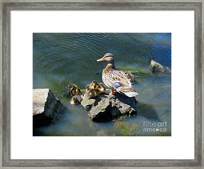 The Swimming Lesson Framed Print by Rory Sagner