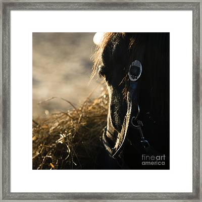The Taste Of Fresh Hay  Framed Print by Angel  Tarantella