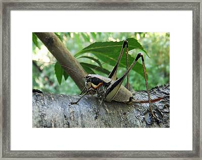 The Thinker Framed Print by Eric Kempson