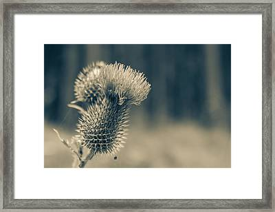 The Thistle Framed Print by Andreas Levi