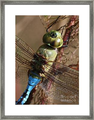The Thorax Framed Print by Carol Groenen