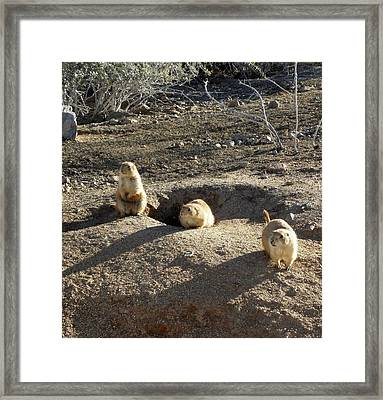 The Three Stooges Framed Print by Kim Galluzzo Wozniak