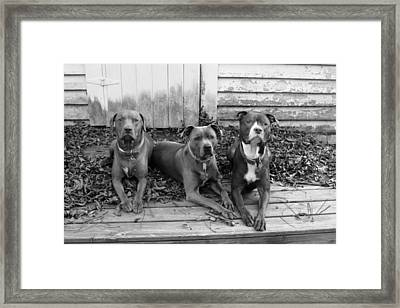 The Three Stoogies Framed Print by Abby Smith