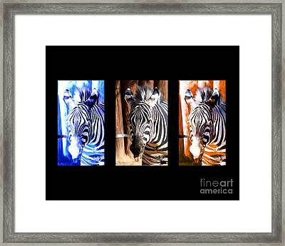 Framed Print featuring the photograph The Three Zebras Black Borders by Rebecca Margraf