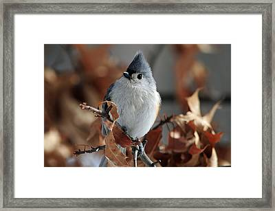 The Titmouse Framed Print by Mike Martin