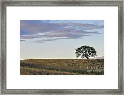 The Tree 2 Framed Print