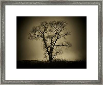 The Tree Framed Print by Big E Photography