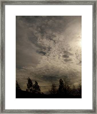 The Tree Cloud Framed Print by Barbara Stirrup