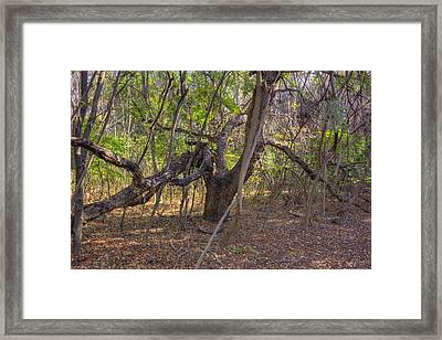 The Tree End Of Life Framed Print