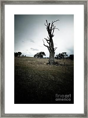 The Tree Framed Print by John Buxton