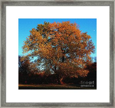 Framed Print featuring the photograph The Tree Of Life by Davandra Cribbie