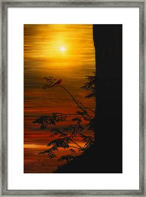 The Tree On The Hill Framed Print by Tom York Images