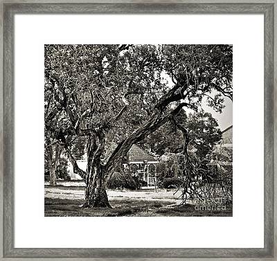 The Tree Which Moves ... Framed Print by Gwyn Newcombe