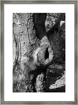 The Trunk Framed Print