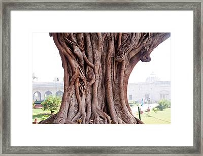 Framed Print featuring the photograph The Twisted And Gnarled Stump And Stem Of A Large Tree Inside The Qutub Minar Compound by Ashish Agarwal