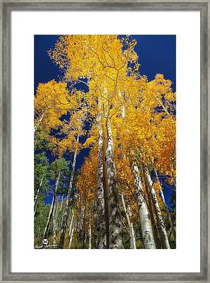 The Two Split Trees Framed Print by Mitch Johanson