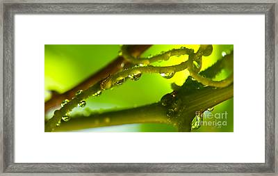 The Vineyard After The Rain Framed Print by Artist and Photographer Laura Wrede