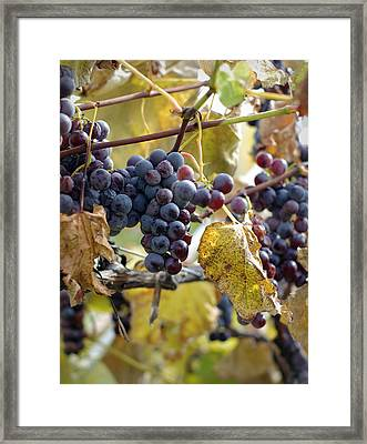 Framed Print featuring the photograph The Vineyard by Linda Mishler