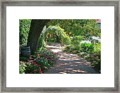The Vineyard Walk II Framed Print