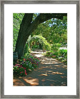 The Vineyard Walk Framed Print