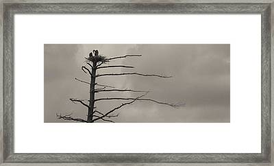 The Vulture Tree Framed Print by Artist Orange