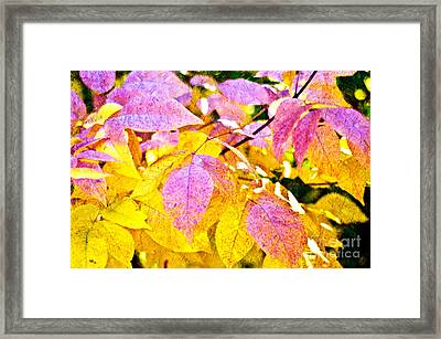 The Warm Glow In Autumn Abstract Framed Print by Andee Design