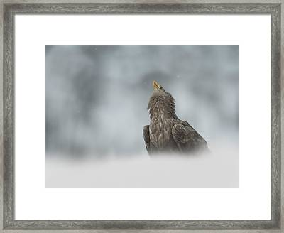 The Watcher Framed Print by Andy Astbury