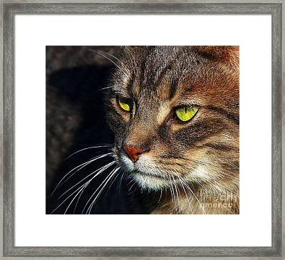 Framed Print featuring the photograph The Watcher by Davandra Cribbie