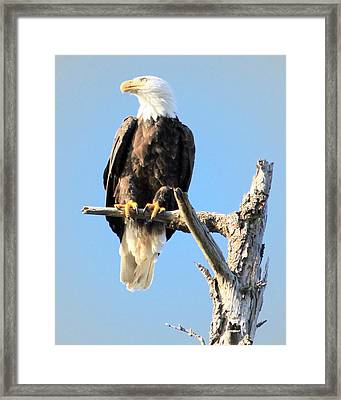 The Watcher Framed Print by Dorothy Hilde