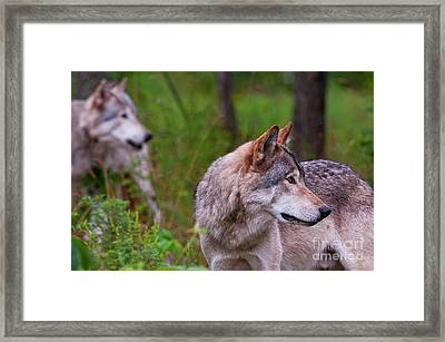 The Watchers Framed Print by Michael Cummings
