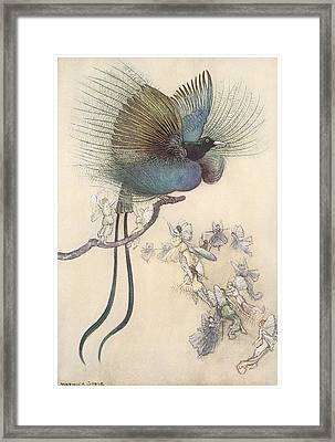 The Water Babies The Most Beuatiful Bird Of Paradise Framed Print by Warwick Goble
