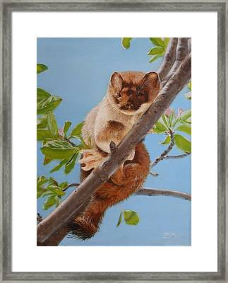 The Weasel Framed Print