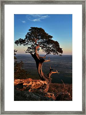 The Weathered Watcher Framed Print by Jeff Rose
