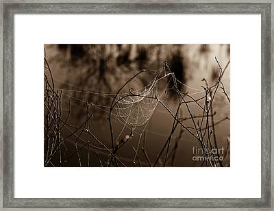 The Web Framed Print by John Stanisich