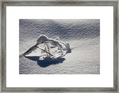 The Weight Of Winter Framed Print by Mike  Dawson