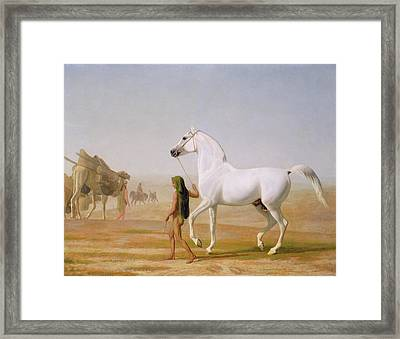 The Wellesley Grey Arabian Led Through The Desert Framed Print