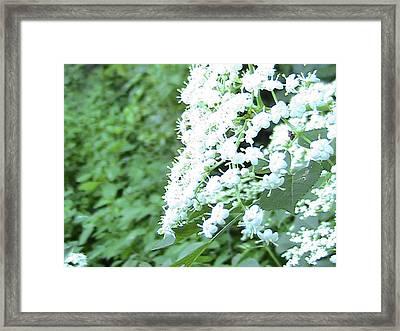 The White Bloom Framed Print by Rachel Snell