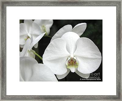 The Whiter Shade Of... Framed Print by Anna Folkartanna Maciejewska-Dyba