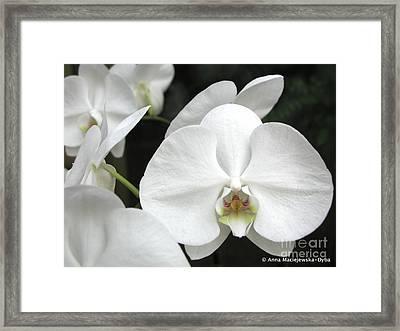 The Whiter Shade Of... Framed Print by Anna Folkartanna Maciejewska-Dyba