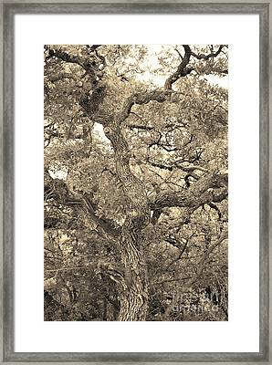 The Wicked Tree Framed Print