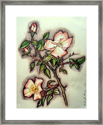 The Wild Rose Framed Print